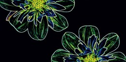 Dekors FLUORESCENT FLOWER GREEN  30x60 cm